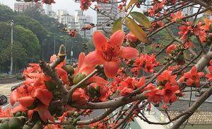 大埔海濱公園の花