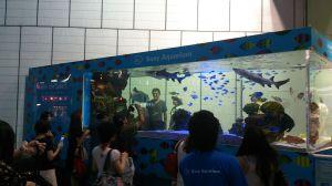 銀座で水族館