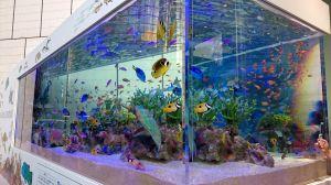 47th Sony Aquarium