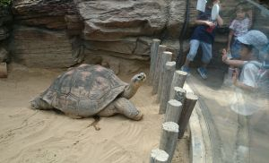 モモカに会いに動物園へ 1