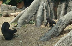 モモカに会いに動物園へ 2