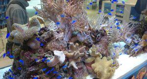 48th Sony Aquarium