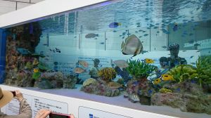 SONY BUILDING 50th Anniversary Sony Aquarium