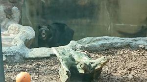 クマとハシビロコウ