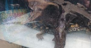 カエルたち