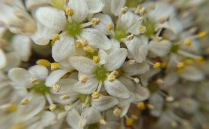 春の花 2