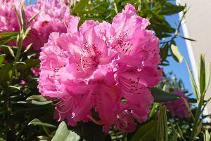 春の花 その後