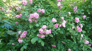 五月の花 2