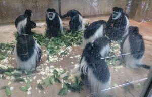 パンダとゴリラだけじゃないよ