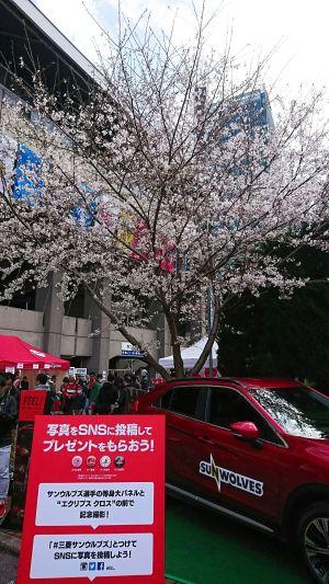 桜が綺麗だったな