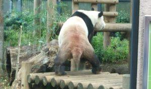 上野で初パンダ