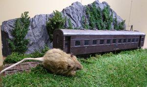 ネズミとカメ